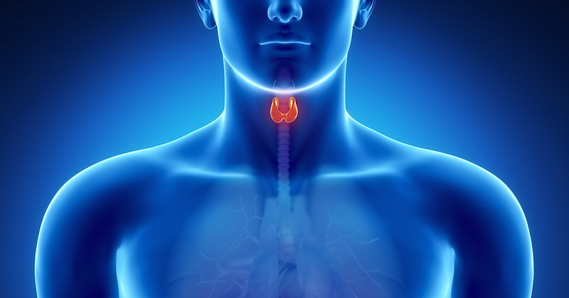 Thyroid-Gland-natural-remedies.jpg